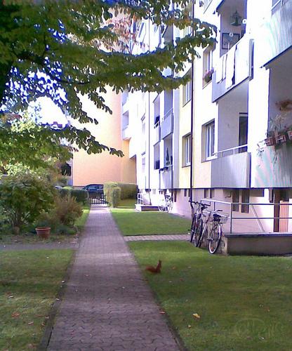 Ardilla roja junto a una bicicleta