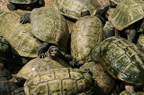 Penang - De repente, tortugas